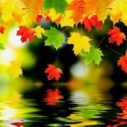 Пазл онлайн: Листья