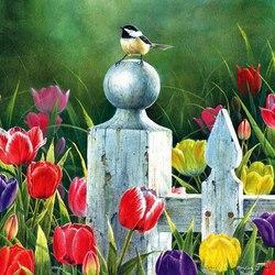 Пазл онлайн: Мир птиц
