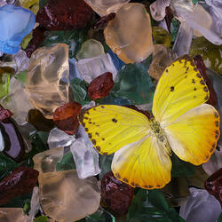 Пазл онлайн: Бабочка и морские стеклышки