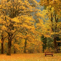 Пазл онлайн: Парковая скамья осенью