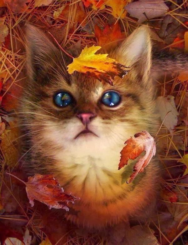 Осень прикольные картинки с надписями живые