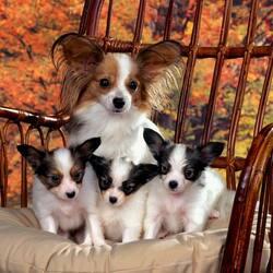 Пазл онлайн: Семейное фото