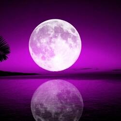 Пазл онлайн: Тропическая луна