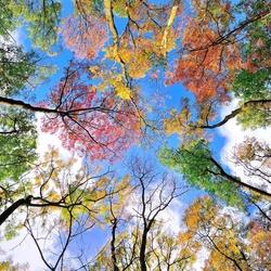 Пазл онлайн: Осеннее небо