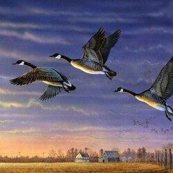 Пазл онлайн: Летят утки