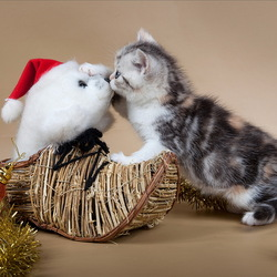 Пазл онлайн: Новогодний котенок