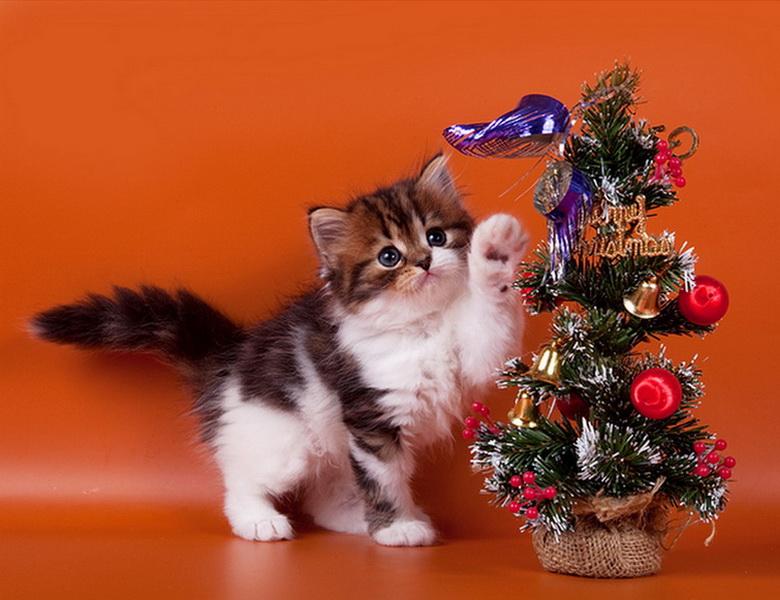 картинки с новогодними котятами идеи подойдут для