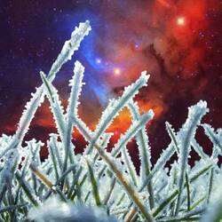 Пазл онлайн: Замерзшая трава