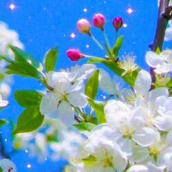 Пазл онлайн: Цветы и бутоны яблони