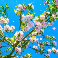 Пазл онлайн: Цветенье яблоньки