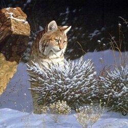 Пазл онлайн: Снежная кошка