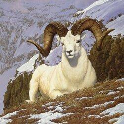 Пазл онлайн: Обитатель гор