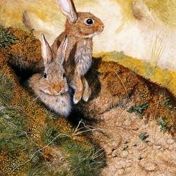Пазл онлайн: Два кролика