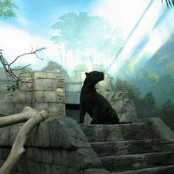 Пазл онлайн: Чёрная пантера