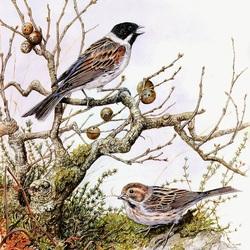 Пазл онлайн: Птичья пара