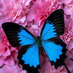 Пазл онлайн: Голубое и розовое