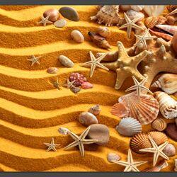 Пазл онлайн: Ракушки на песке