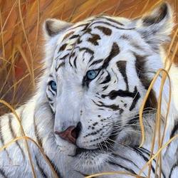 Пазл онлайн: Голубоглазый тигр