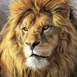 Пазл онлайн: Косматый лев