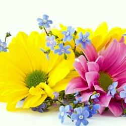 Пазл онлайн: Хризантемы и незабудки