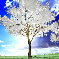 Пазл онлайн: Белое дерево