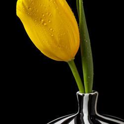 Пазл онлайн: Тюльпан в полосатой вазе