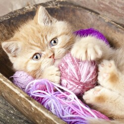 Пазл онлайн: Рыжий котенок
