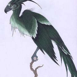 Пазл онлайн: Авгур(Augerey) (также известен как Ирландский Феникс)