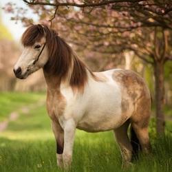 Пазл онлайн: Пони