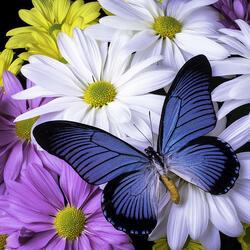 Пазл онлайн: Голубая бабочка