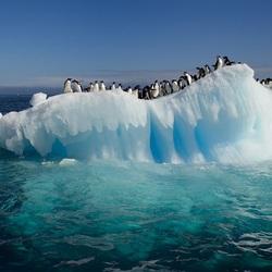 Пазл онлайн: Теплый день в Антарктиде