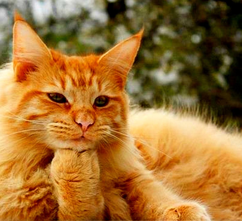Прикольная картинка кот который размышляет, открытку