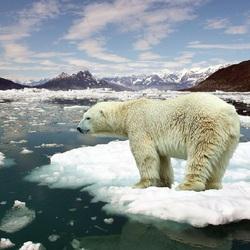 Пазл онлайн: На льдине