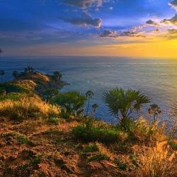 Пазл онлайн: Утро в тропиках