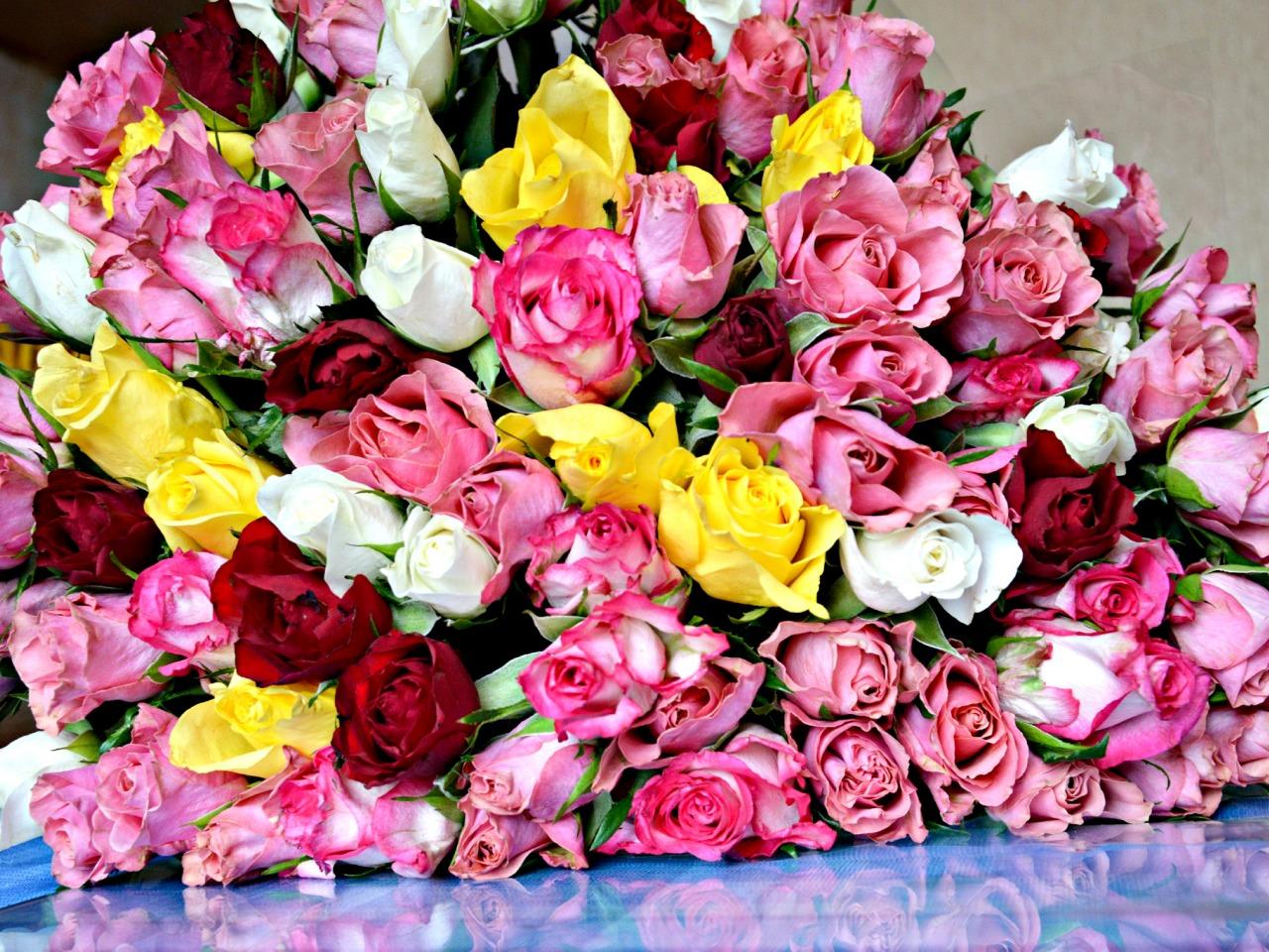 100 красивейших цветов фото