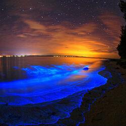 Пазл онлайн: Светящиеся озера Джипсленд