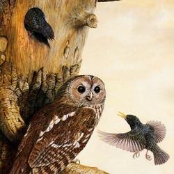 Пазл онлайн: Гостья-сова