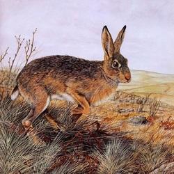 Пазл онлайн: Полевой заяц
