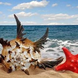 Пазл онлайн: Морская звезда и раковина
