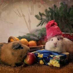 Пазл онлайн: Забавные животные