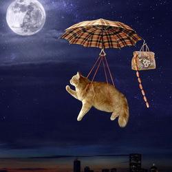 Пазл онлайн: Есть где-то Кошачья Планета