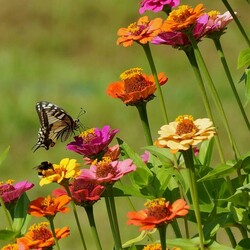 Пазл онлайн:  Бабочка, пчелка и цветы