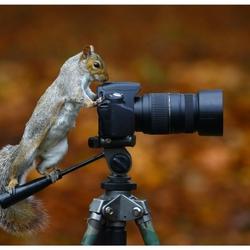 Пазл онлайн: Хвостатый фотограф