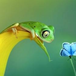 Пазл онлайн: Лягушка и бабочка