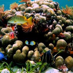 Пазл онлайн: Коралловые домики
