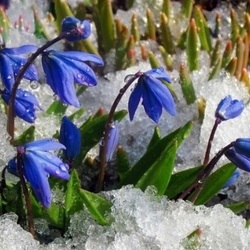 Пазл онлайн: Первые цветочки