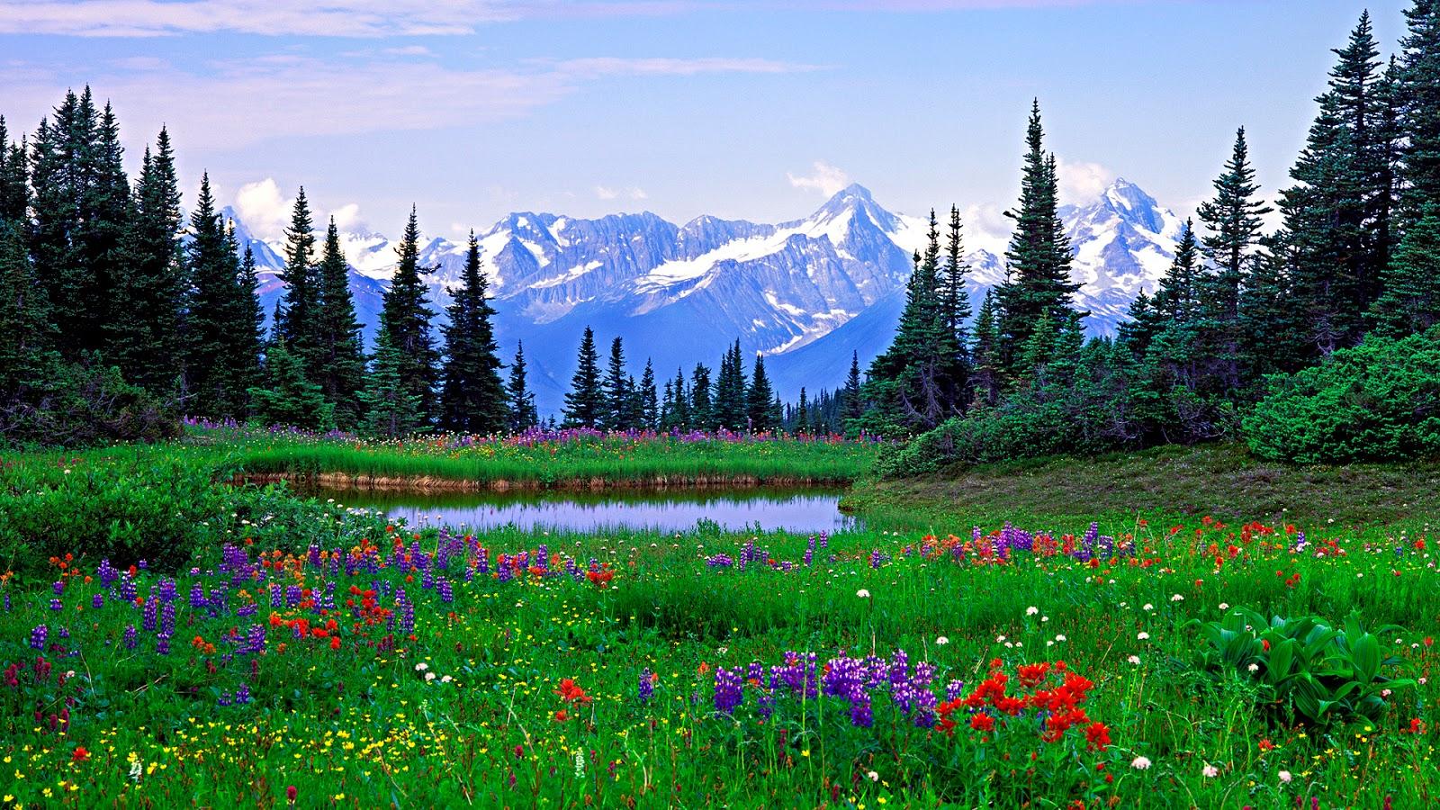 Фото и картины природы и цветов