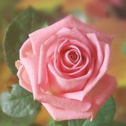 Пазл онлайн: Лабиринты любви