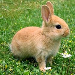 Пазл онлайн: Кролик