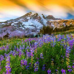Пазл онлайн: В горах